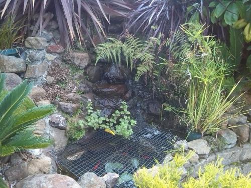Garden Inspiration 6